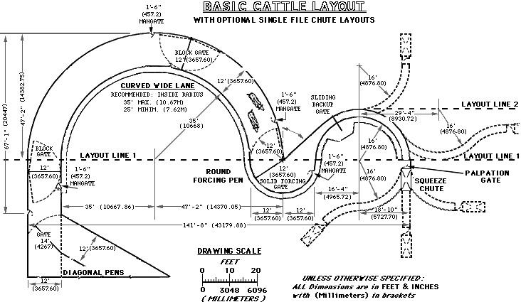 Basic Cattle Layout