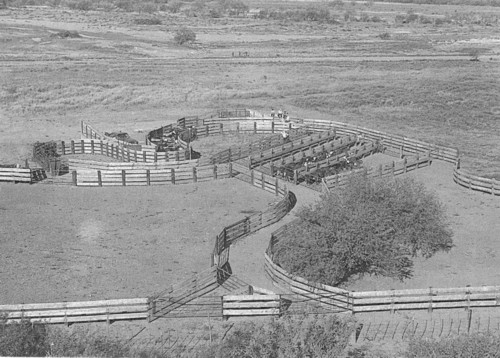 The design and construction of facilities for handling cattle