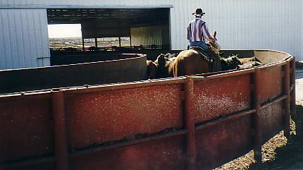 Behavioral Principles of Livestock Handling